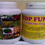 http://indonesiaorganik.id/wp-content/uploads/2017/01/jual-top-fungi-aceh-top-fungi-surabaya-fungisida-organik-top-fungi-jogja-top-fungi-website-bandung-fungi-top-ten-kupang-1-150x150.png