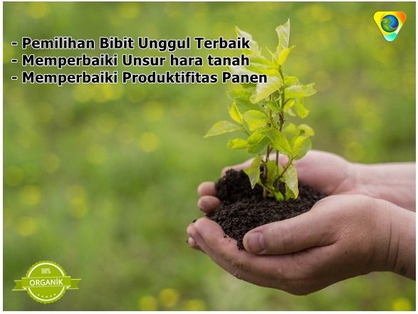 http://indonesiaorganik.id/wp-content/uploads/2017/01/tanaman1.jpg