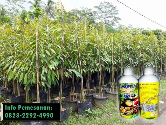 ✅MURAH_TLP: 0823–2292–4990. ✅MURAH pupuk durian cepat berbuah di Metro, DISTRIBUTOR pupuk durian agar berbuah lebat Kota Bumi, PRODUSEN pupuk durian super Bandar Lampung