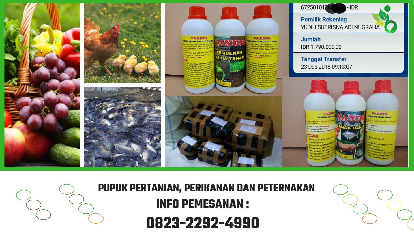 ✅HUB_0823*2292*4990. ✅Harga pupuk Organik Buah Naga Lampung, Agen Pupuk organik cair buah naga, Jual Pupuk Cair Buah Naga lampung