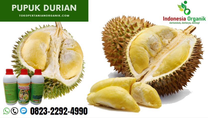 ☑️MURAH..//o823*2292*499o. GROSIR pupuk durian berbuah di luar musim Bekasi, AGEN pupuk nongfeng durian Bogor, MURAH garam pupuk durian Ciamis