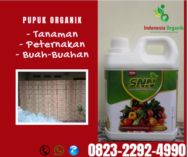 ✅AMANAH_0823*2292*4990 DISTRIBUTOR pupuk padi ciherang Wamena, PRODUSEN pupuk padi yg bagus Jayapura, TOKO pupuk padi dari nasa Sentani