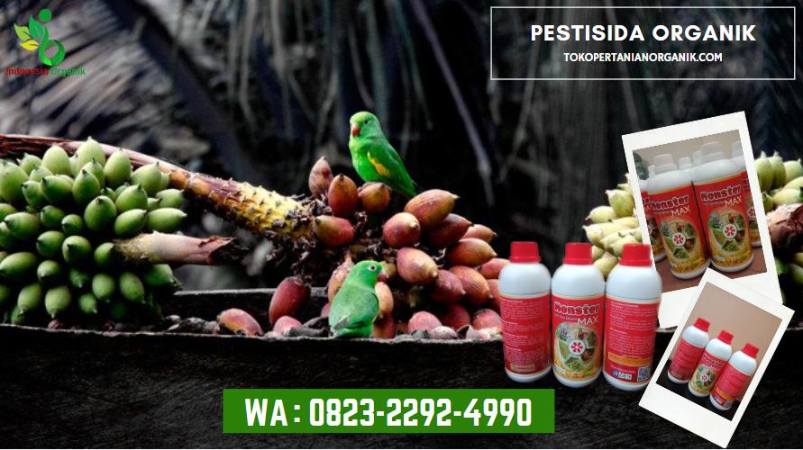 ✅TERPERCAYA_WA: 0823*2292*4990. JUAL pupuk hama nasa Sumatera Utara, HARGA pupuk hama daun Medan, DISTRIBUTOR pupuk hama cabe Tapanuli Tengah