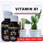 SUPPLIER PUPUK vitamin b1 untuk anggrek Soreang, AGEN PUPUK vitamin b1 untuk kaktus Banten, JUAL PUPUK vitamin b1 untuk tanaman hias Serang, DISTRIBUTOR PUPUK vitamin b1 untuk perangsang akar Semarang, HARGA PUPUK vitamin b1 untuk monstera Banjarnegara, AGEN PUPUK vitamin b1 untuk bunga Yogyakarta, SUPPLIER PUPUK vitamin b1 untuk sukulen Bantul, DISTRIBUTOR PUPUK vitamin b1 untuk tanaman DKI Jakarta, HARGA PUPUK vitamin b1 untuk pemacu bunga Jakarta, AGEN PUPUK vitamin b1 untuk aglaonema Bandung