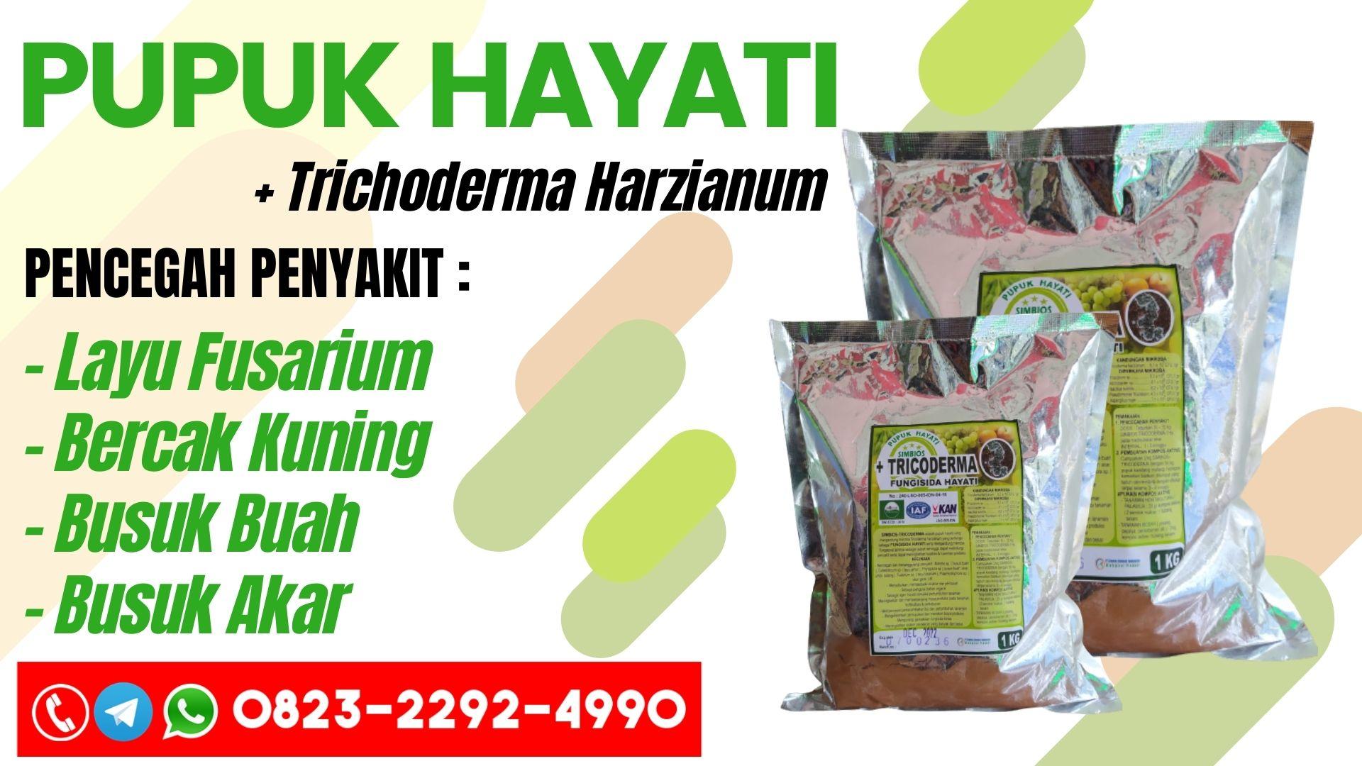 GROSIR Pupuk layu fusarium Serikin, HARGA Pupuk jamur layu fusarium Bau, Pupuk layu fusarium pada pisang Divisi Serian, Pupuk layu fusarium pada kacang panjang Balai Karangan, Pupuk layu fusarium pada kacang tanah, Pupuk obat layu fusarium kentang, Pupuk obat layu fusarium kentang, Pupuk klasifikasi layu fusarium, Pupuk penyakit layu fusarium pada kelapa sawit, Pupuk layu fusarium pada lombok, Pupuk layu fusarium melon