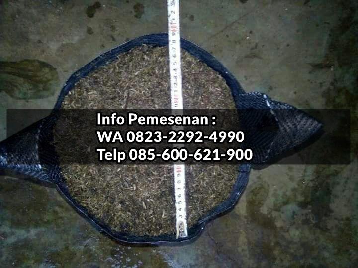 HARI INI_0823*2292*4990. TEMPAT planter bag kaskus, TOKO planter bag di surabaya, PRODUSEN planter bag tokopedia